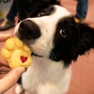 dog eating small cute paw cookie