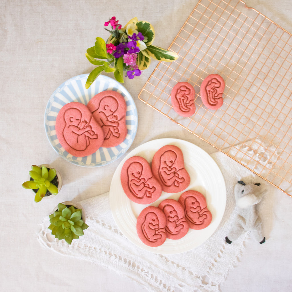 set of 4 fetal baby development cookies