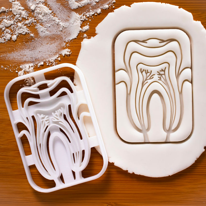 Tooth Anatomy Cookie Cutter