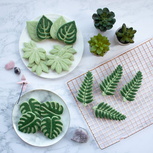 Monstera (Swiss Cheese Plant), Fern, Devil's Ivy, and Japanese Aralia (Paperplant) cookies