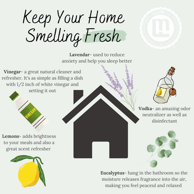 5 Natural Air Fresheners to Energize Your Home