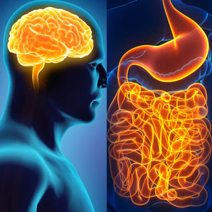 The Connection Between the Gut & the Brain