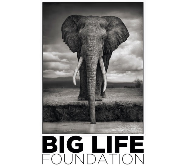 Big Life Foundation logo icon to show Sybarite Cellars support for elephant conservation.