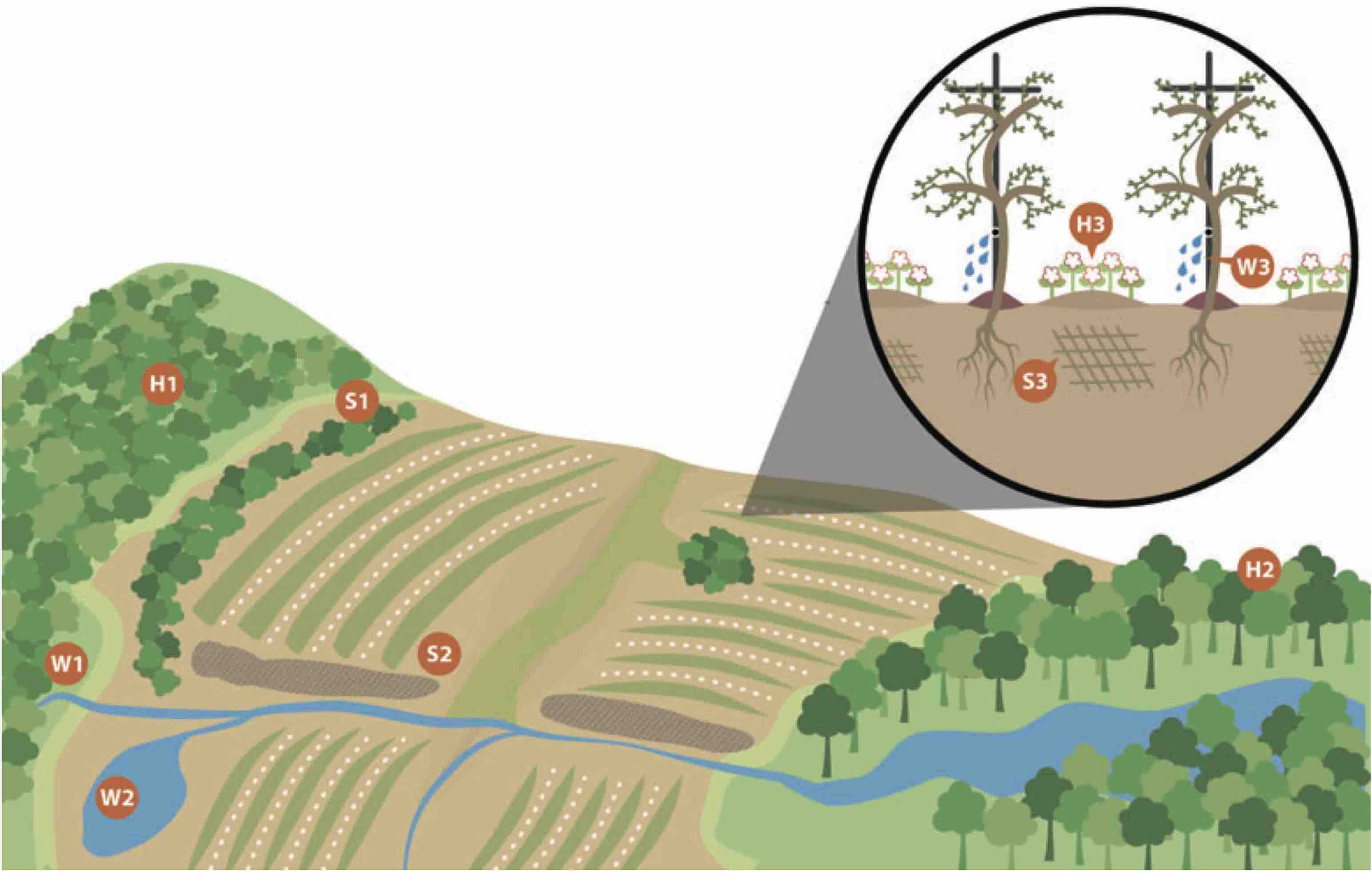 Diagram of a working ecologically sustainable vineyard landscape with a mosaic of agriculture, woodlands and riparian areas.