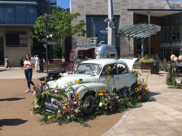 """Moggie"" helps promote Fever Trees"