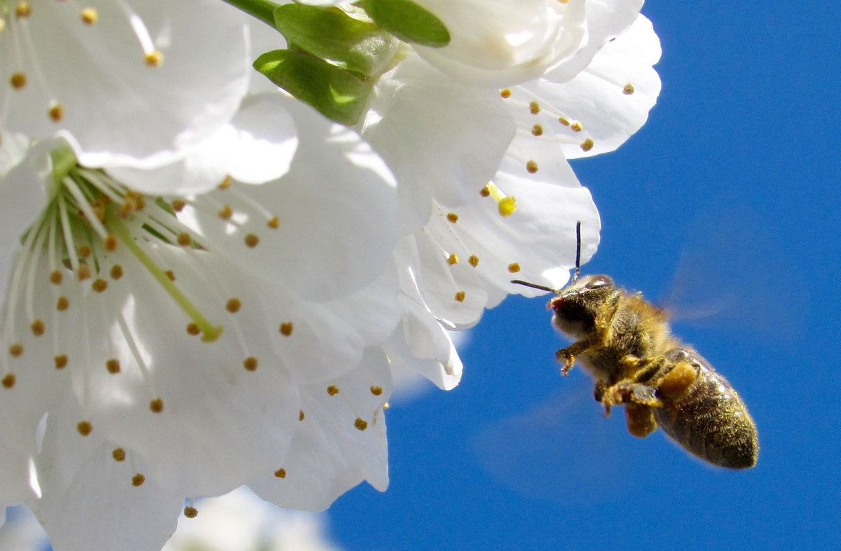 Why are bees essential to our survival?