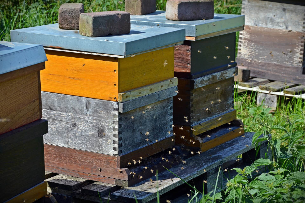The different types of hives