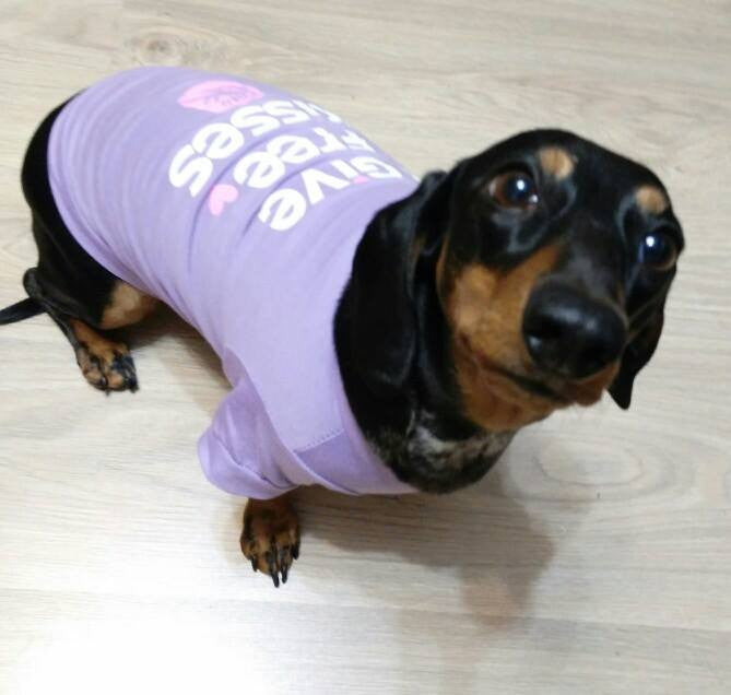 Lovely Dachshund Clothes Small Dog Clothes Cheap Dog Clothes Dog