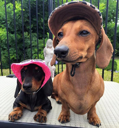🎁 FREE GIVEAWAY! - Summer Dachshund Hats - Limited Time 🎁