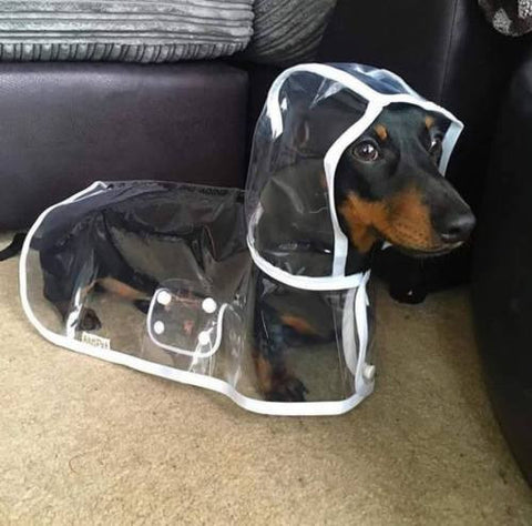 Dachshund rain coats, best small dog rain coats