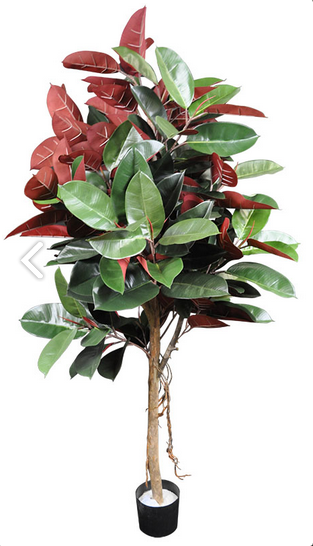 Ficus Elastica Tree - SILK