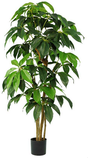 Schefflera Amata Tree - SILK