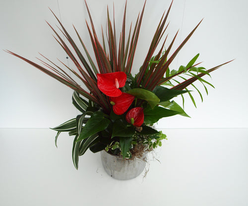 Dish Gardens - Special Order Item