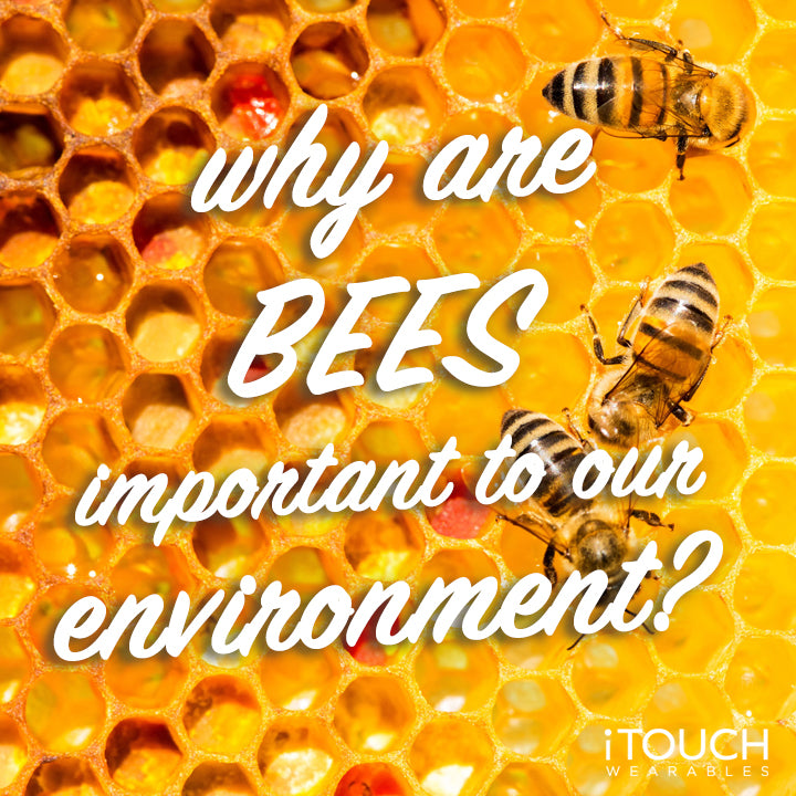 Why Are Bees Important To Our Environment?