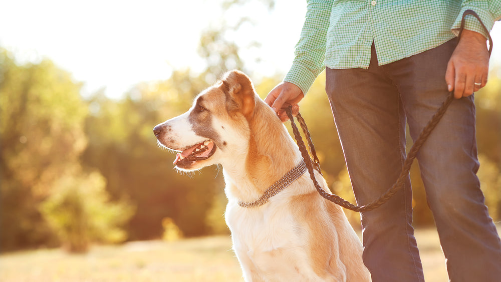 Best Dog-Walking Workouts