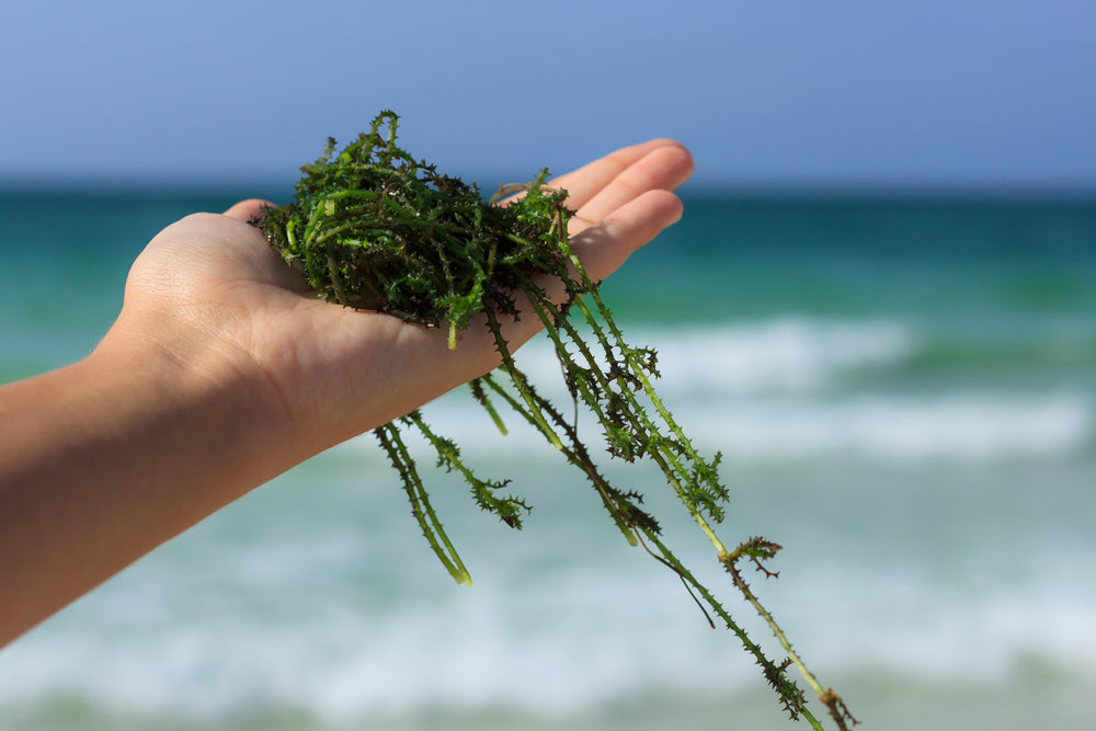 Is Seaweed The New Superfood ?