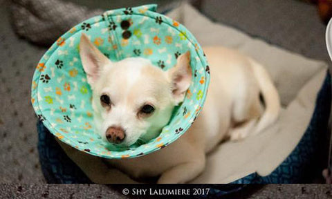 Soft Elizabethan Dog Cone with KAM snap fasteners