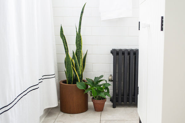 The 5 House Plants You Should Keep in Your Bathroom