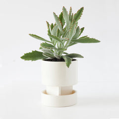 Light and Ladder Stoneware Archromo Planter and Tray
