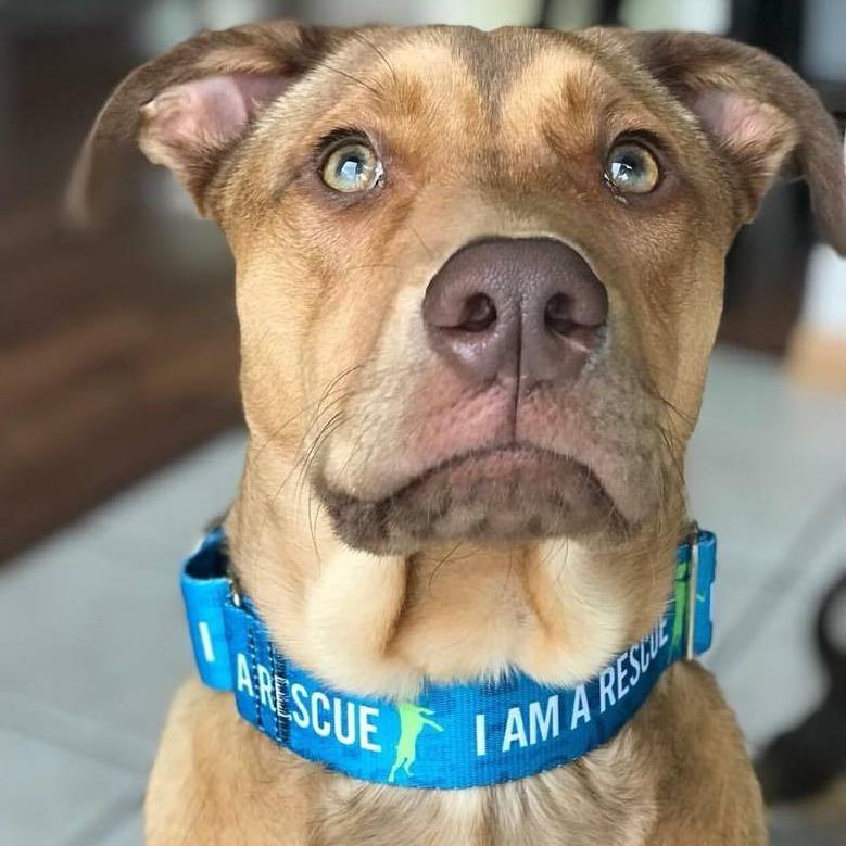 I AM A RESCUE Training Collar