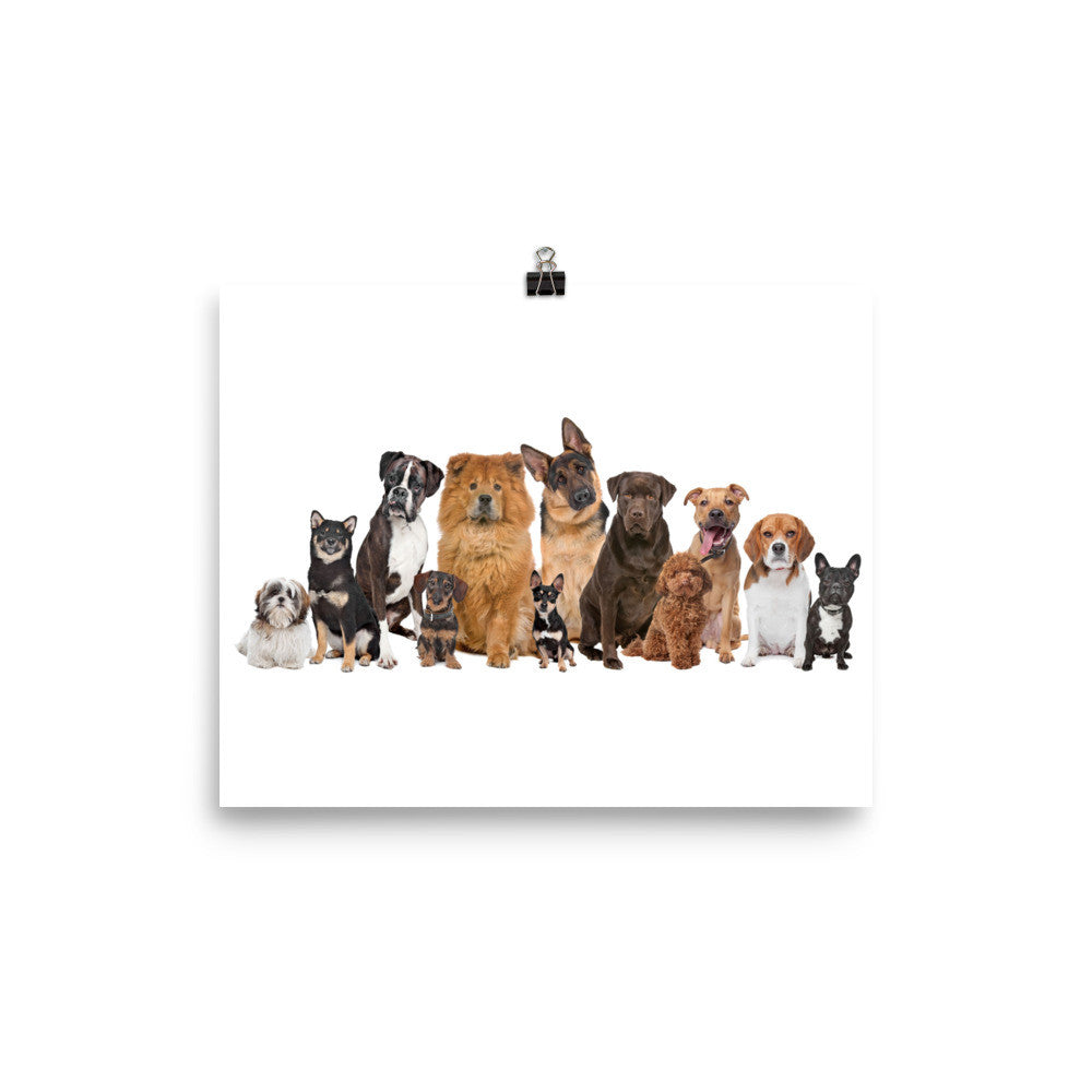Dog Family Reunion poster