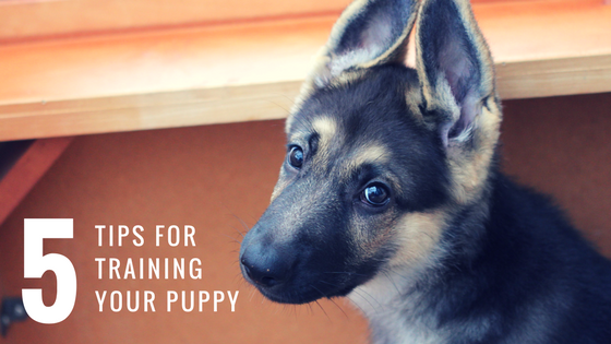 5 Tips For Training Your Puppy