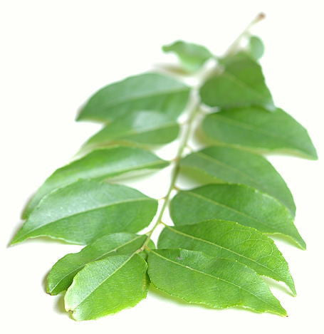 curry leaf hydrosol