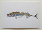 Original watercolor Stickle back freshwater fish Frits Ahlefeldt