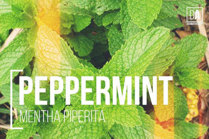 Organic Peppermint - DA Aromatherapy Featured Herbs Series
