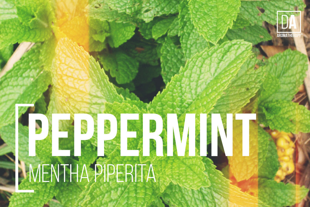 DA Aromatherapy Fun Facts about Essential Oils - Peppermint