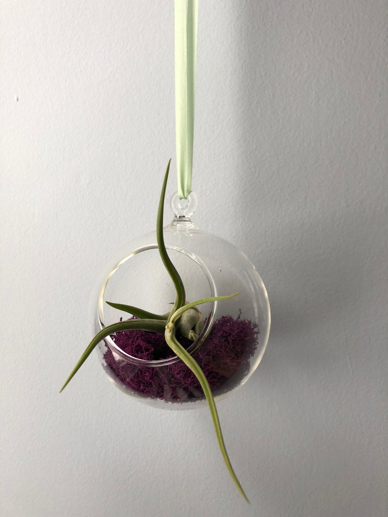 Hanging airplant planter