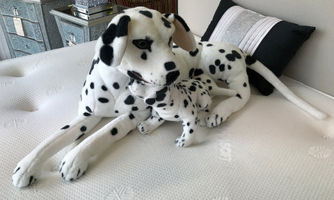 Dalmatian with Puppy Dog Soft Toy