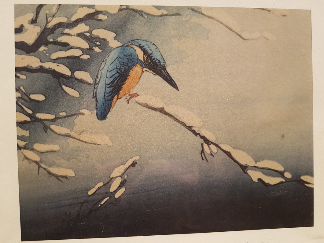 Museum Christmas Card Pack: Kingfisher on Snow Covered Branch