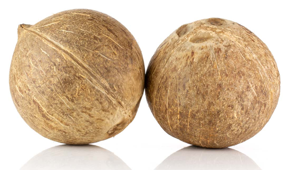 pair of coconuts isolated