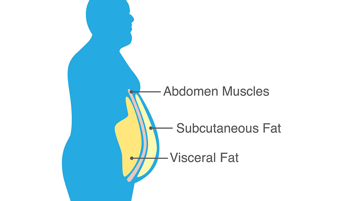 visceral fat diagram
