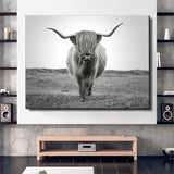 Scottish Bull