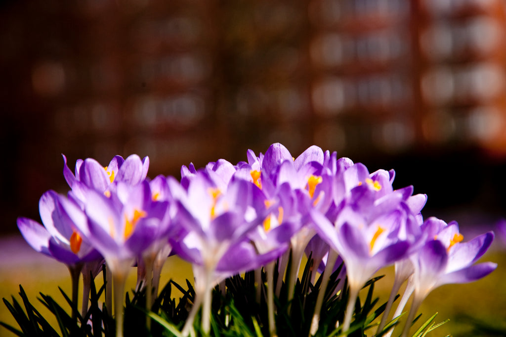 Benefits of Saffron Extract: Helping Everything From Your Mood To Your Waistline!