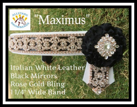 Maximus In Stock COB Size
