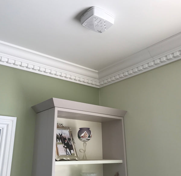 Decorative Plaster Coving | Ornate | Cornice