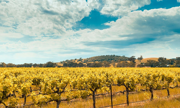 Discover Australia's Wine Regions: From Bold Shiraz to Delightful Sparkling Wines