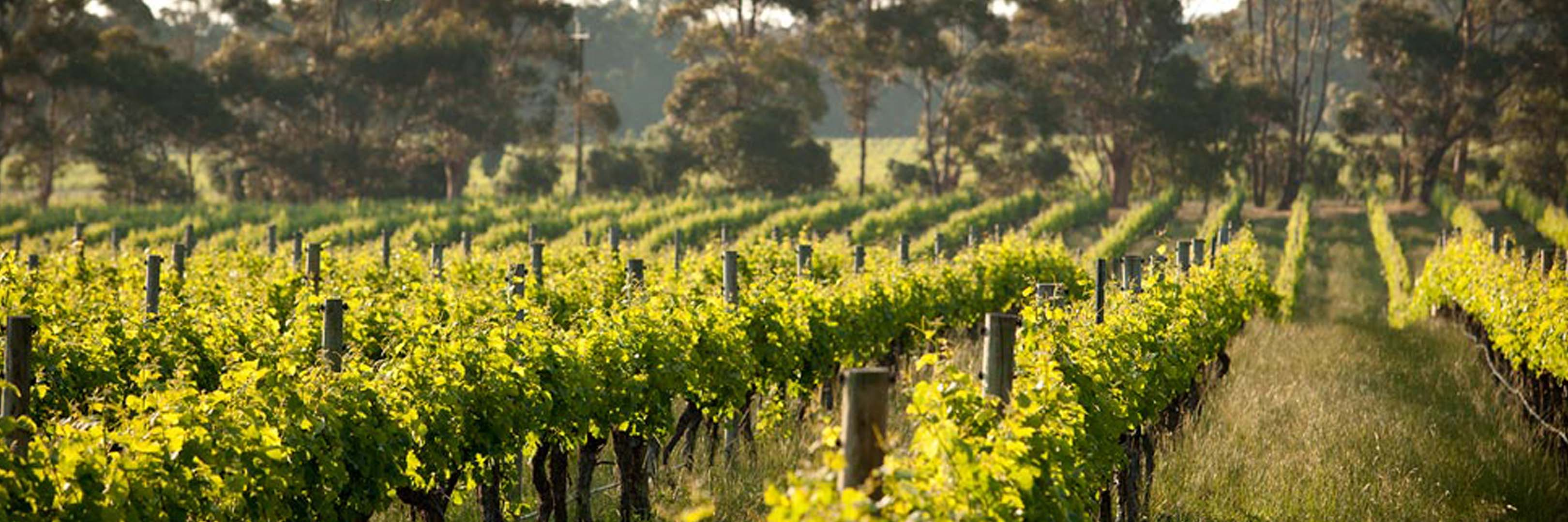 Cape Mentelle - Cape Mentelle Australian wines available on Winery Philippines