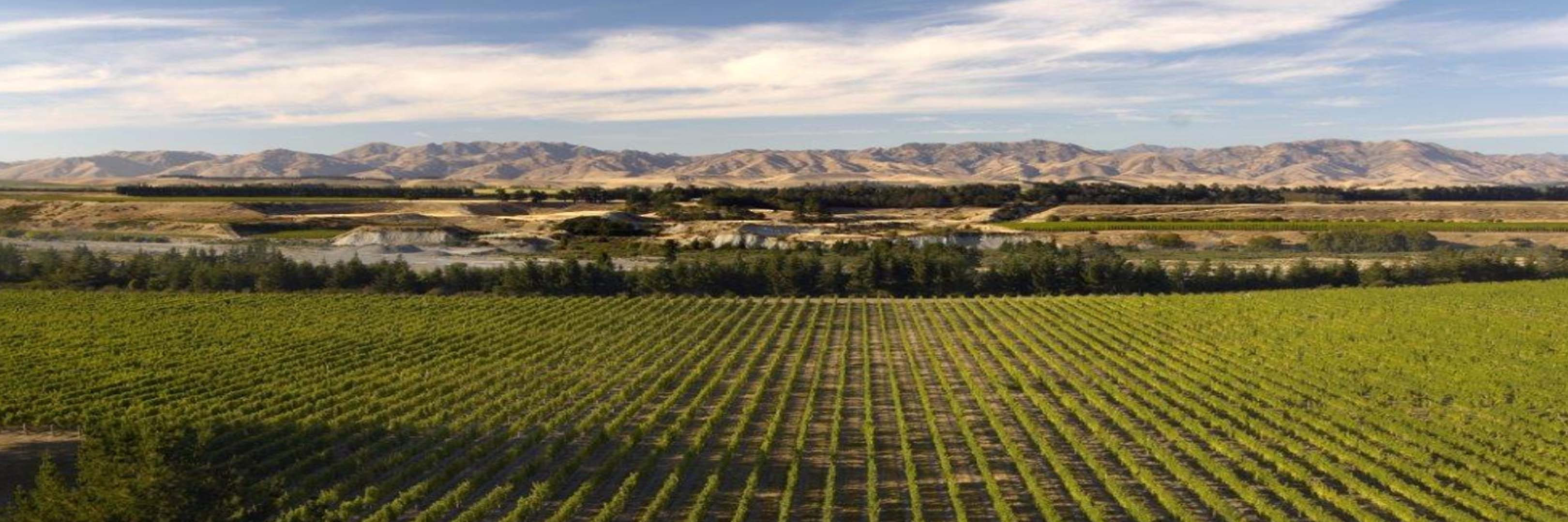 Cloudy Bay Vineyards - Cloudy Bay Vineyards New Zealand wines available on Winery Philippines