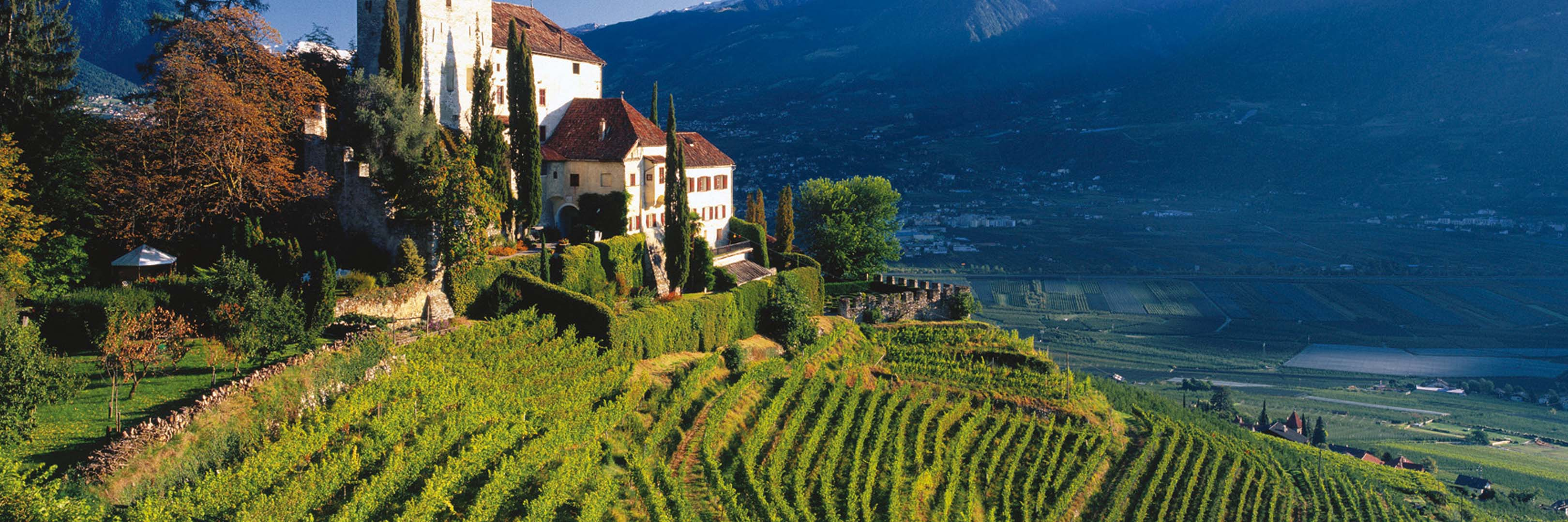 Wines from Italy - Buy Italian wines in the Philippines