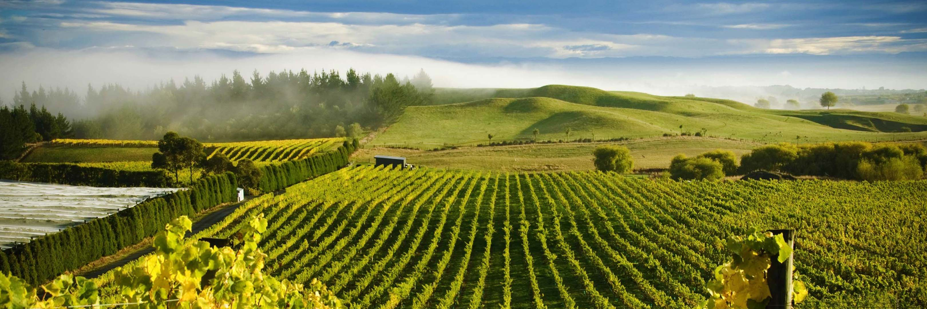 Looking for New Zealand wines? Buy New Zealand red wines and white wines from Winery Philippines, #1 online wine store for the best New Zealand wine brands and New Zealand wine types in the Philippines.