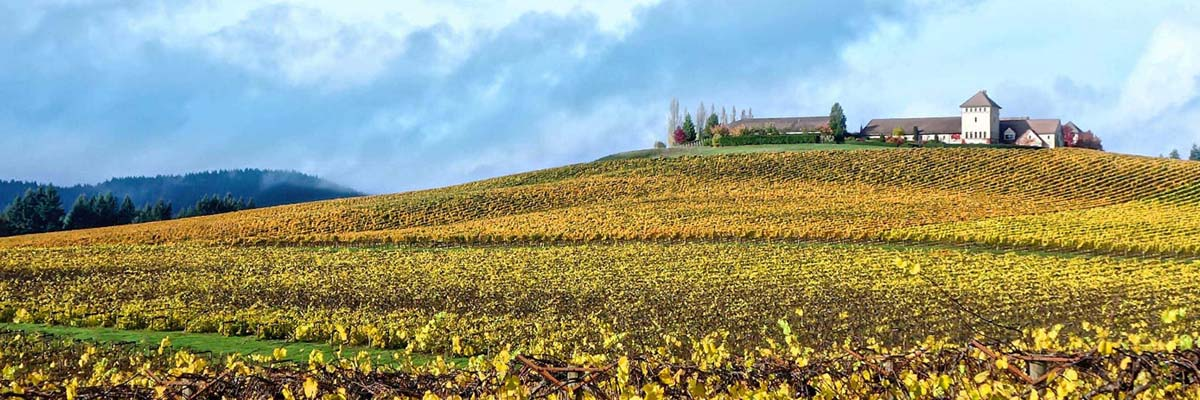 Krug - Krug Champagnes available on Winery Philippines
