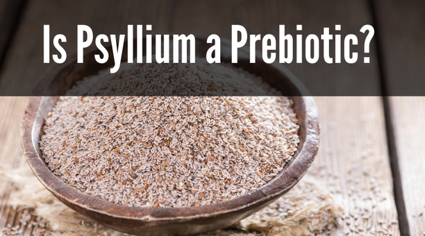 Is Psyllium a Prebiotic?