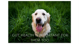 Dogs Have Gut Health Problems, Too