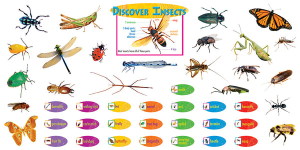 Discover Insects