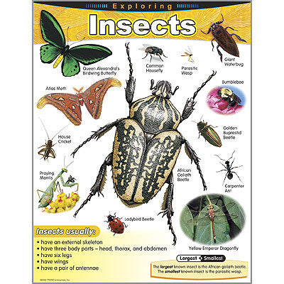Exploring Insects