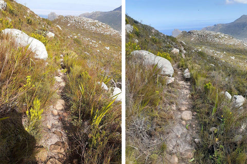 Before and after photo of trail clearing by SANParks Honorary Rangers. Before photo on the left and after photo on the right.